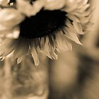 Sepia Sunflowers 1 by Melinda Anderson