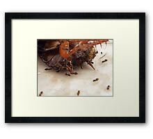 ©NS Clean Team IVA Framed Print