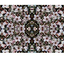 Kaleidoscopic Garden 24 Photographic Print