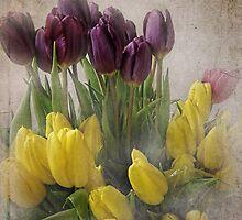 Spring Tulips by vigor