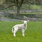 Spring Lamb by Sue Knowles