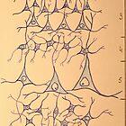 cortex cerebri by DrNagel