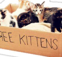 Free kittens Sticker