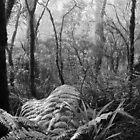Rainforest No.7 by Kitsmumma