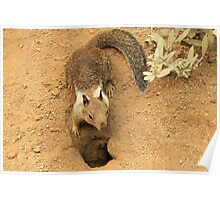 Squirrel and Burrow Poster
