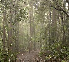 Enchanted Forest by Ann  Van Breemen