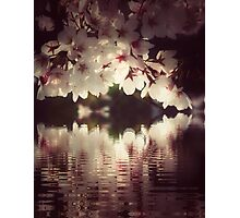 The glory of Spring blossoms Photographic Print