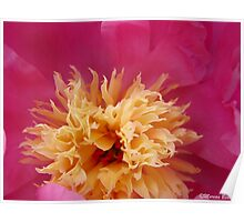 Peony ballet Poster