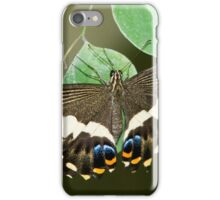 Anise Swallowtail Butterfly iPhone Case/Skin