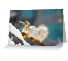 Red Squirrel 2 Greeting Card