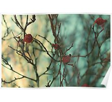 Red Winter Berry Poster