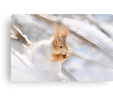 Red Squirrel 5 Canvas Print
