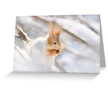 Red Squirrel 5 Greeting Card