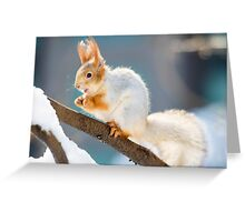 Red Squirrel 3 Greeting Card