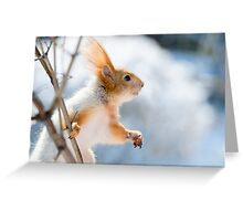 Red Squirrel 6 Greeting Card