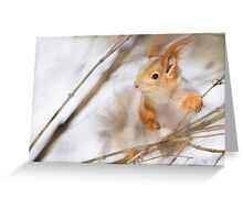 Red Squirrel 8 Greeting Card
