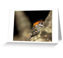 Peek-A-Boo Spider Greeting Card