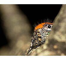 Peek-A-Boo Spider Photographic Print