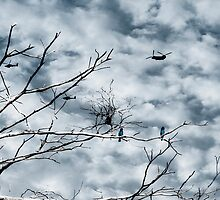 Kingfishers and Helicopters by Geckojoy