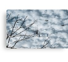 Kingfishers and Helicopters Metal Print