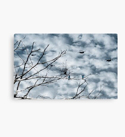 Kingfishers and Helicopters Canvas Print