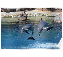 Dolphin Magic Poster