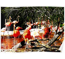 Flamingo Lagoon Poster