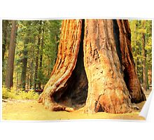 Giant Sequoia, Sequoia National Park Poster