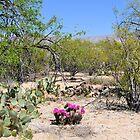 Blooming Hedgehog Cactus by Kathleen Brant