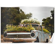 Flowering an old Holden Poster