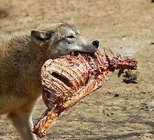 Wolf With Carcass by virtualdiablo