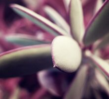The succulent plant by RafaelArty