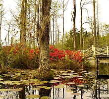 Cypress Gardens White Bridge by Chris King