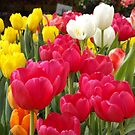 Colorful Tulips, Union Square, New York City by lenspiro