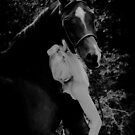To hug a horse is to hold its heart by Brian Edworthy