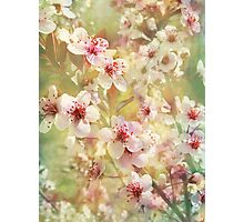 Sand Cherry Blossom Flourish Photographic Print
