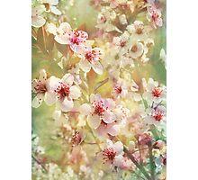 Sand Cherry Blossom Flourish Photographic Print