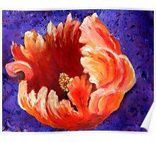 Rembrant Tulip Poster