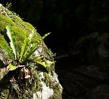 fern by Anne Scantlebury
