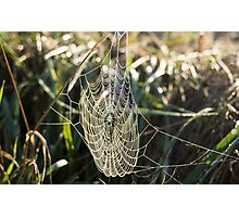 the web Photographic Print
