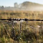 barbed wire by Anne Scantlebury