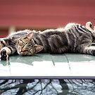 Cat On A Hot Tin Roof by Mikell Herrick