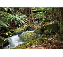 Green Creek Photographic Print