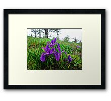 Spring at Finley Refuge Framed Print
