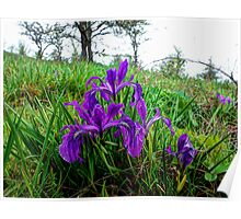 Spring at Finley Refuge Poster