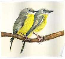 Eastern Yellow Robins Poster