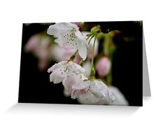 Rain and blossoms Greeting Card