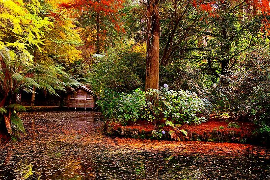 Sherbrooke Australia  City pictures : Autumn in Sherbrooke Forest Melbourne Australia