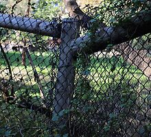 Wood And Wire Fence. by Raymond J. Marcon