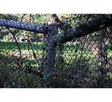 Wood And Wire Fence. Photographic Print